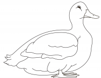 Drawing simple duck for children Coloring Page