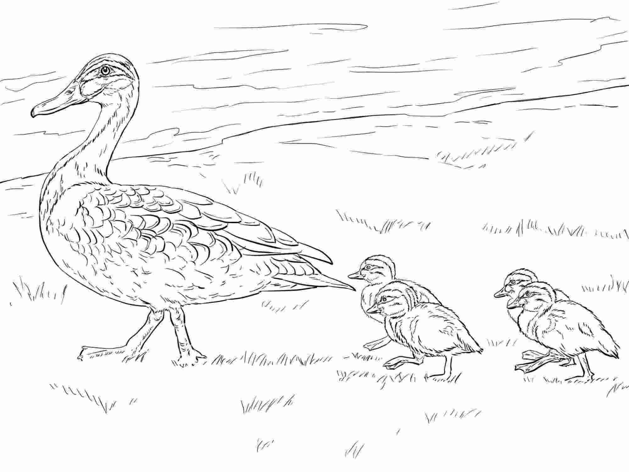 Duck and Ducklings walking on the grass Coloring Pages
