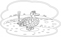 Angry duck in the swamp Coloring Page
