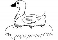 Duck on nest near water Coloring Page