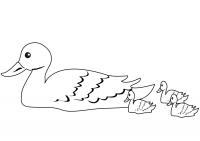 Duck and ducklings swimming in the swamp Coloring Page