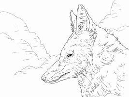 Ethiopian Wolf head has thick fur Coloring Page