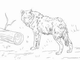 Eurasian Wolf has short and dense fur Coloring Page