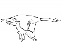 Flying duck in the sky Coloring Page