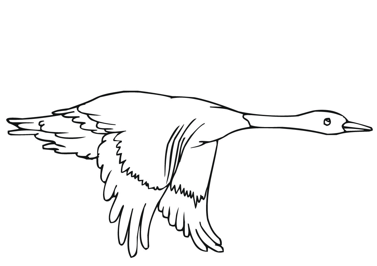 Flying duck in the sky Coloring Pages