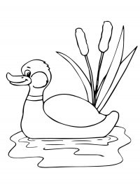 Funny Mallard duck in the pond Coloring Page