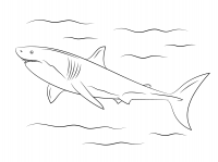 Great white shark are known to take very deep dives Coloring Page