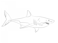 Dangerous great white shark prefers to eat marine mammals Coloring Page