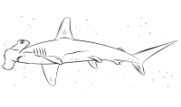 How to draw hammerhead shark simple for children Coloring Page