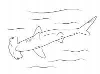 Hammerhead shark use its hammer-shaped head to detect and eat prey Coloring Page