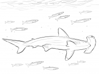 Hammerhead Shark with pilot fishes in marine life Coloring Page