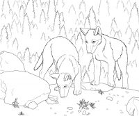 Two wolves forages some food near the rock Coloring Page