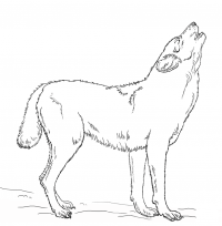 Howling Wolf in the night Coloring Page