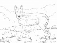 Iberian Wolf stares at something Coloring Page