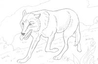 Wolf feels hungry Coloring Page