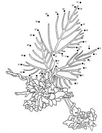 Connect the dots to discover the Kudzu Coloring Page