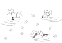 Male Mandarin ducks swimming in the maple leaves day Coloring Page