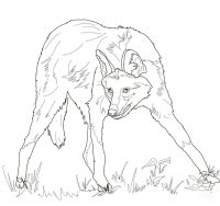 Maned Wolf has long black legs and tall, erect ears Coloring Page