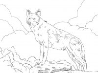North American Red Wolf standing on the ledge Coloring Page