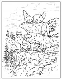 Wolves prepares enclosure prey Coloring Page