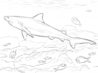 Realistic Bull shark eats several species of bony fishes Coloring Page