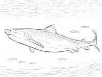 Realistic aggressive predators tiger shark in marine life Coloring Page