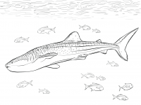 Realistic whale shark with pilot fishes under the oceans Coloring Page