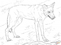 A red wolf seems to be hungry Coloring Page