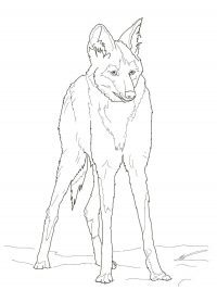 Reddish Maned Wolf has a thick red coat Coloring Page