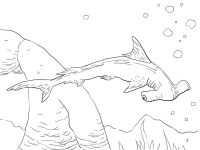 Scalloped Hammerhead Shark has a broadly arched and narrow-bladed head Coloring Page