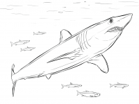 Shortfin Mako Shark is One of the fastest fishes on the planet Coloring Page