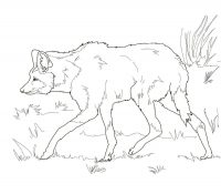 A scrawny South American Maned Wolf Coloring Page