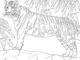 Standing Bengal tiger on the mountain Coloring Page