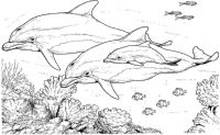 Dolphin family with another fish and corals Coloring Page