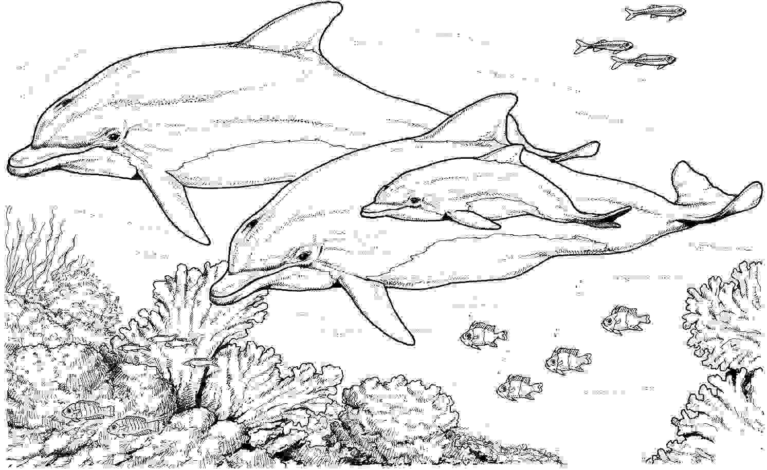 Dolphin family with another fish and corals Coloring Pages