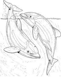 Two dolphins in the sea Coloring Page
