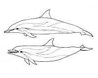 Amazon river Dolphin and Spinner Dolphin Coloring Page