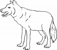 A wolf is growling alone Coloring Page