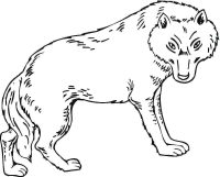 The wolf has dangerous eyes Coloring Page