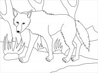 The wolf goes wandering in the woods Coloring Page