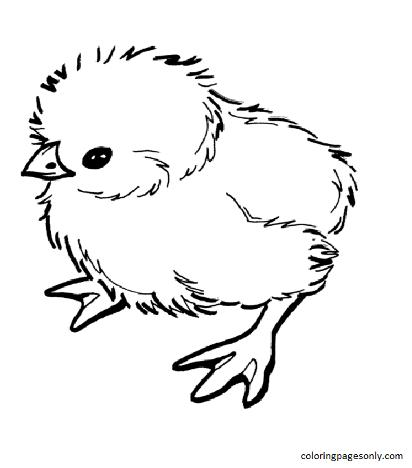 Baby Chick 1 Coloring Page