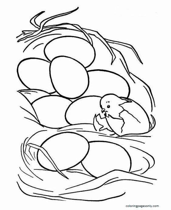 Chicken Just Hatching From Egg Coloring Page