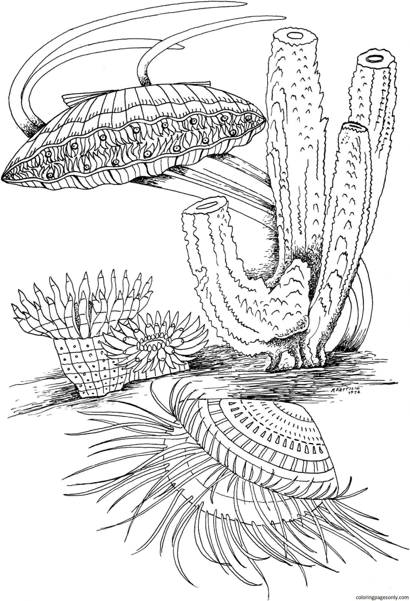 Clam Shell and Marine Life Coloring Page