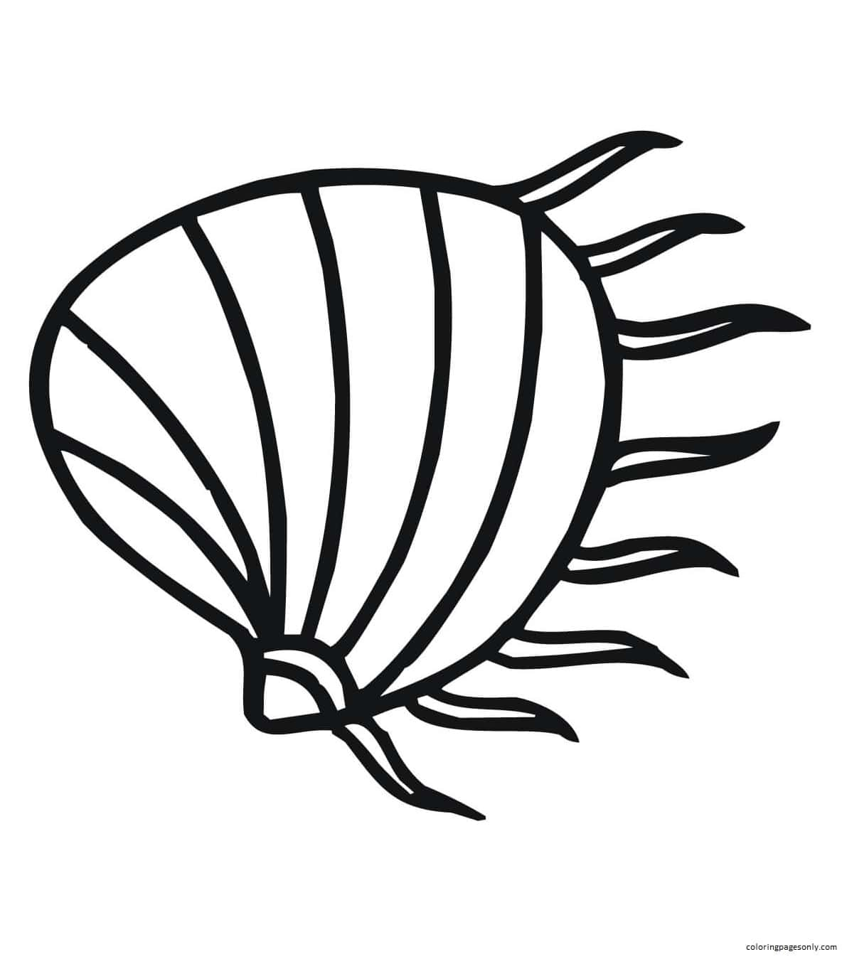 Clam Shell Pattern Coloring Page