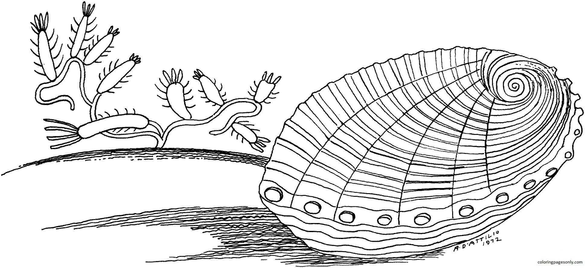 Clam Underwater Coloring Page