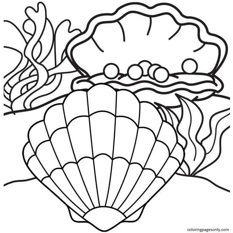 Clam With Pearl 1 Coloring Page