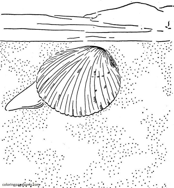 Cockle Clam Coloring Page