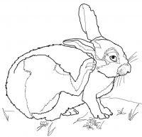Big cottontail rabbit raises its leg Coloring Page