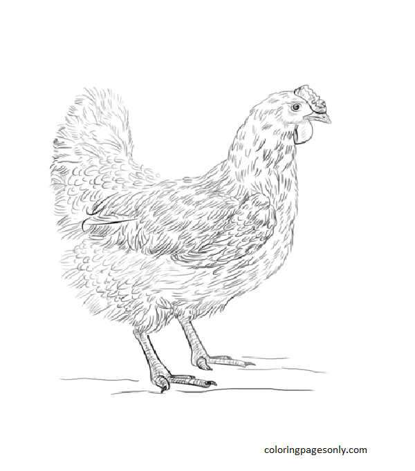 Hen 1 Coloring Page