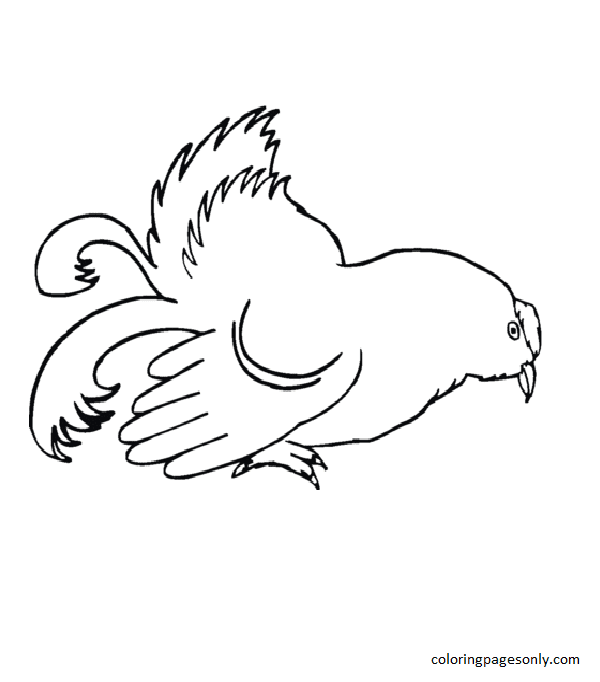 Hen 2 Coloring Page